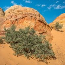Brainrocks in den Coyote Buttes