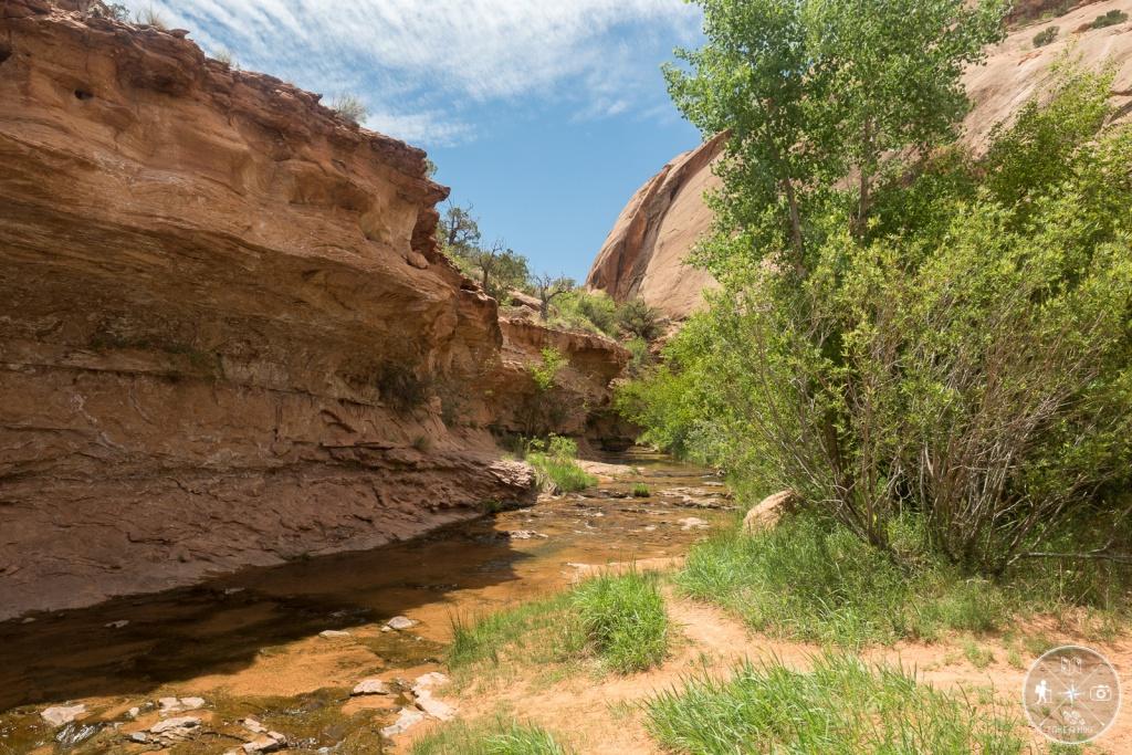 Negro Bill Canyon - eine willkommene Abkühlung am kleinen Fluss